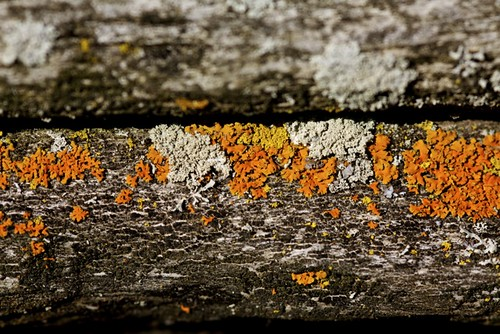 lichen in autumn colours