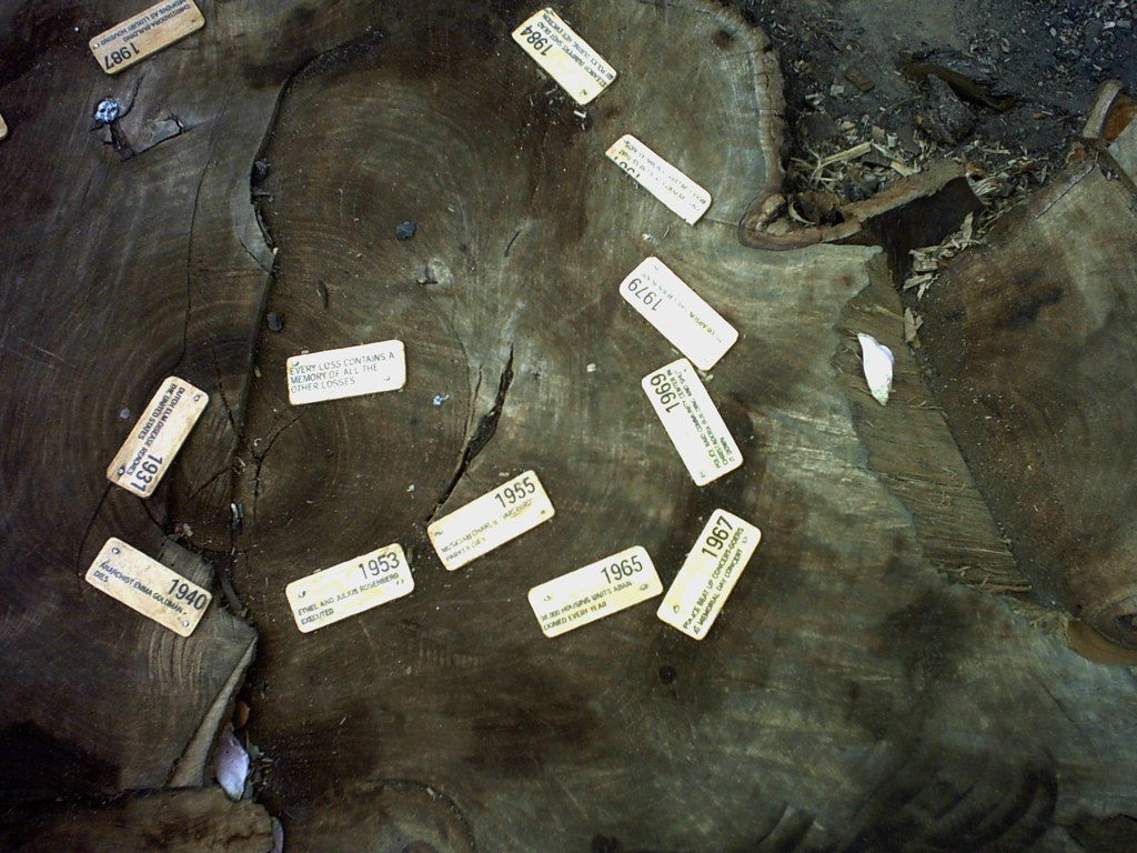 Tree Ring Radical History