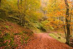 Fall Again (elosoenpersona) Tags: autumn trees naturaleza fall nature arboles camino asturias trail bosque otoo monte hayas corvera piloa elosoenpersona riofabar