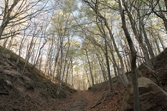 Valley with Glacial Erratic (sandy richard) Tags: wildwood wildwoodstatepark newyorkstateparks longislandbeaches sandyrichard sandrarichard