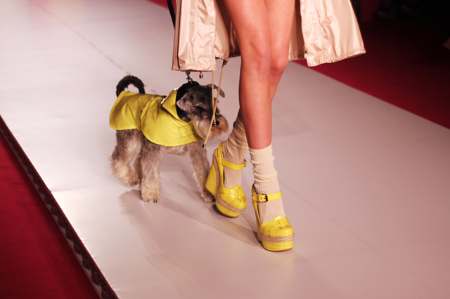 mulberry ss12 dogs