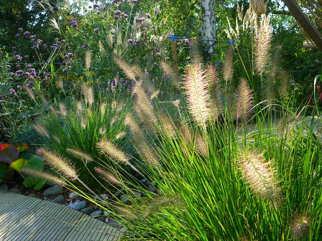 Sonnenfänger (Jörg Paul Kaspari) Tags: Roof Sunlight Grass Garden Feather  Jardin Bergenia Gras