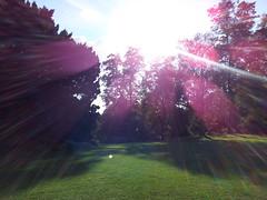Sun burst.jpg (pepemczolz) Tags: park york trees summer sun grass forest lens purple flare burst flickroid