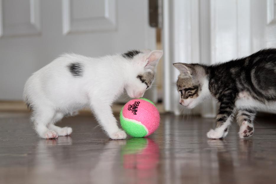 092111_kittens07