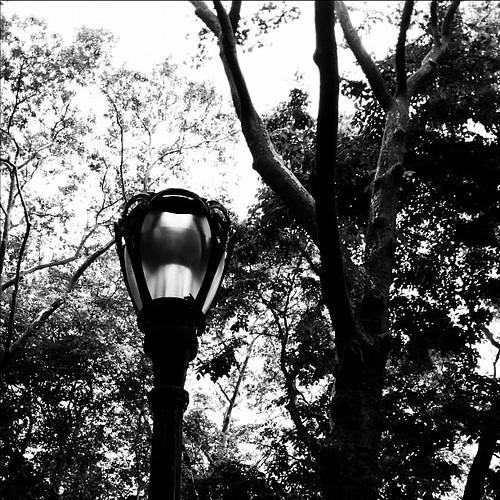 #centralpark #manhattan #newyorkcity