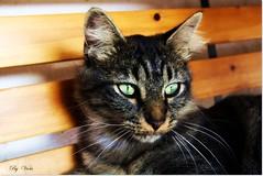 Puki (Simply Viola) Tags: cats animals kittens felini gatti animali gattini pukis
