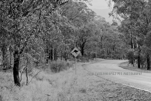Kangaroo about road sign by twoguineapigs pet photography