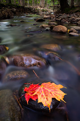 autumn prelude (Nate Parker Photography) Tags: longexposure autumn red orange fallleaves detail fall water leaves forest woods stream anp dusk maine newengland foliage le brook barharbormaine acadianationalpark haveaniceday 24mmtse