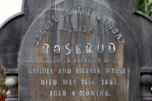 Rosebud Maisey