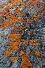 auyuittuq project 5 163 (MichaelHD ( michaelhdavies.com )) Tags: park canada mountains mike grass clouds nikon north arctic national lichen nikkor nunavut turf baffinisland auyuittuq northof60 auyuittuqnationalpark michaeldavies pangirtung d700 akshayukpass michaelhdavies weaselriver