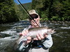 Paul enjoys a plump Upper Sacramento River Rainbow