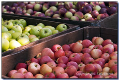 Apples (Lisa-S) Tags: autumn ontario canada lisas harvest diagonal repetition apples milton invited 50d 4991 andrewsscenicacres soldongetty copyright2011lisastokes getty20120103 getty2012