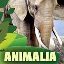 ICONSanimalia