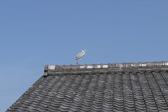 Heron on Kyoto Roof