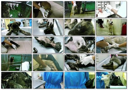 「資訊」台北市動物之家內湖收容所安樂死作業,政府只會撲殺不會送養,請以「送養代替棄養」,20111010