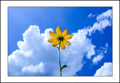 close-up #2 [Explored] (e.nhan) Tags: life blue light sky flower art nature yellow closeup landscape colorful colours backlighting enhan