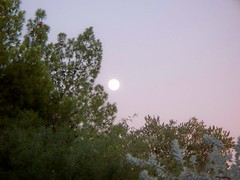 Under the Moon (Robert Suchy) Tags: arizona tucson moonshot colorfulsky septembermoon moonphoto azsunsets akysunset