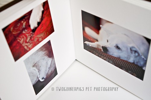 5.twoguineapigs pet photography new product offering, custom pet portraiture