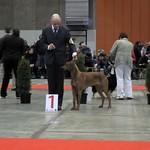 "Farouks nieuwe titel: Brussels Junior Winner 2010 <a style=""margin-left:10px; font-size:0.8em;"" href=""http://www.flickr.com/photos/68800547@N03/6257358746/"" target=""_blank"">@flickr</a>"