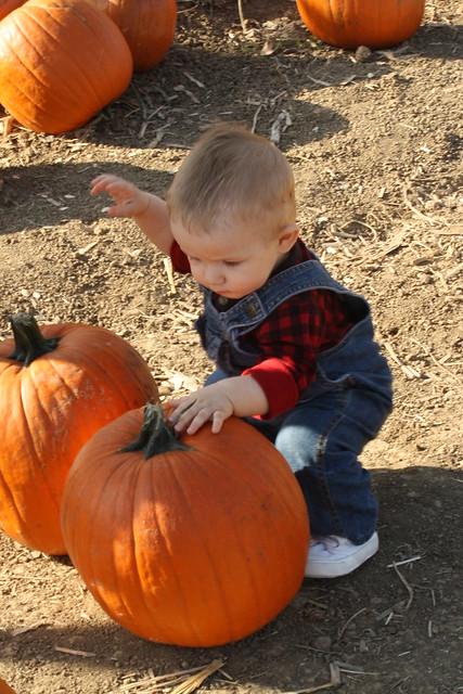Fall Farm 2011 154