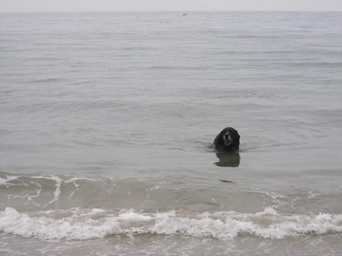jake swims