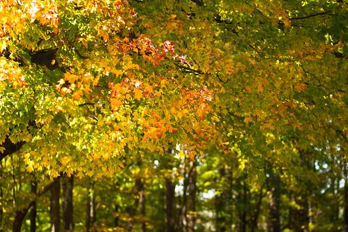 fall-9763.jpg