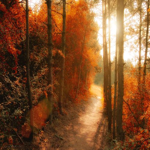 path to the shine - EXPLORED - 11/09/11