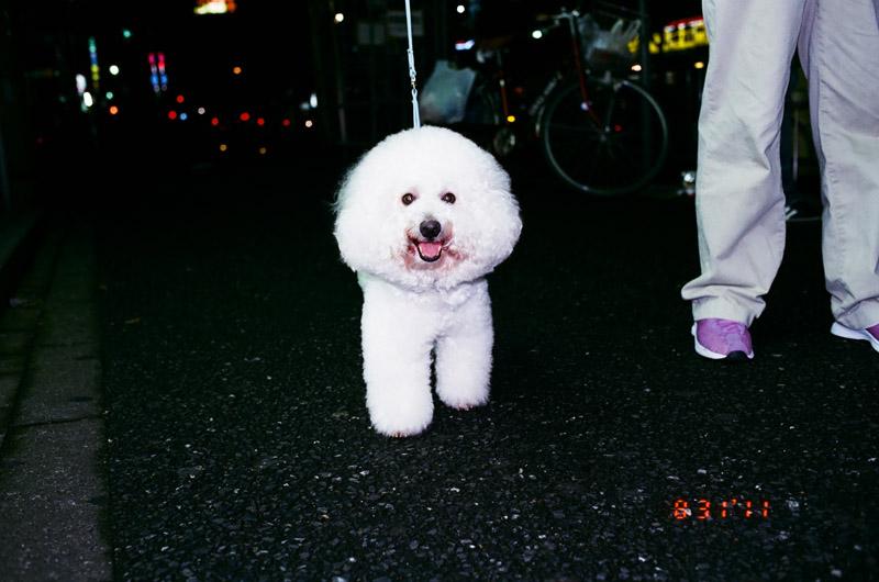 2Ddog (2 of 2)