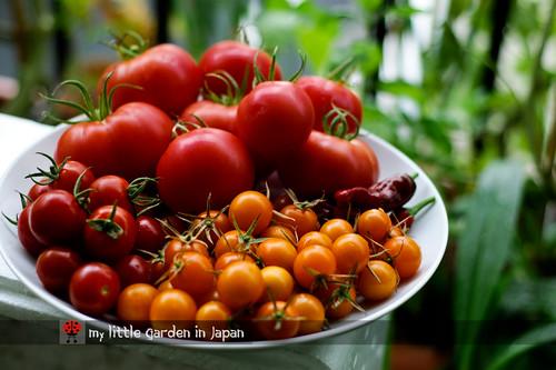 summer-harvest-1