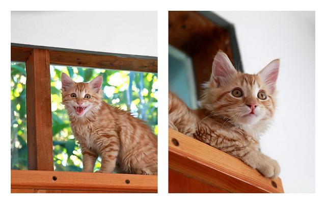 kitten first birthday