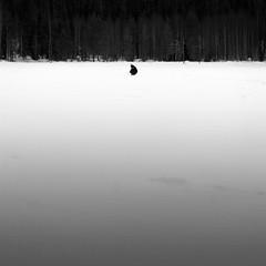 Finland | Lappi | Luosto | icefishing (get t android) Tags: trees people blackandwhite bw white lake black ice finland landscape fishing flickr italia lapland icefishing lappi lonelyness luosto