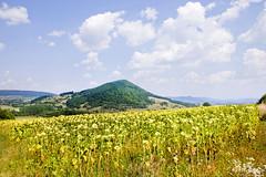Sunflowers field - Bulgarian - Serbian border (Grace Olsson Fotograf(I´m abroad)) Tags: sky mountains yellow clouds landscape montana bluesky bulgaria sunflowers balkans fiel greenfiel graceolssonfotograf