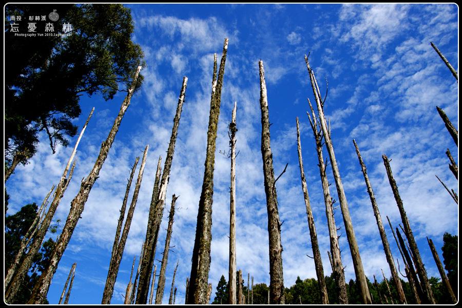 鹿谷旅遊︱山林秘境~忘憂森林.爬上山好累、但為了一切美景好值得