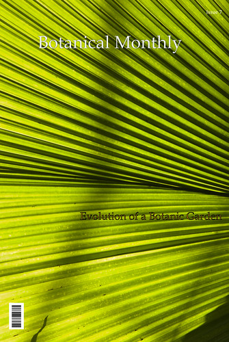 Cover - Light through Palm Leaf 2