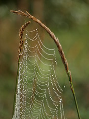 Jeweled Web (Mulewings~) Tags: morning fog spider dewdrops spiderweb commute mississippiriver jewels daybreak sept2011