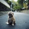 Carry me! (TAT_hase!) Tags: dog kyoto kodak hasselblad 400 京都 portra cf planar 80mm carlzeiss heistired 503cxi 老犬 10mづつ歩いてすぐ休む犬。 ご主人に目で訴えてます。 だっこして。 かわいいなぁ。。