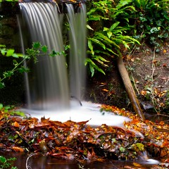Ring of leaves (Steve-h) Tags: park wood longexposure autumn trees ireland dublin woman nature water pool girl leaves wall female woodland waterfall europa europe long exposure suburban earth stones dam small eu holly september filter ferns density neutral bushypark ndfilter 2011 iso50 steveh 20secondexposure manfrottotripod cofferdam 20second september2011 190cxpro4 canoneos5dmk2 doublyniceshot doubleniceshot canonef100mmf28lmacroisusm tripleniceshot artistoftheyearlevel3 artistoftheyearlevel4 artistoftheyearlevel5 4timesasnice 6timesasnice 5timesasnice faderndneutraldensityadjustablefilter 391rc2manfrottolightweighthead gigatproiiwirelessremotecontrol 7timesasnice artistoftheyearlevel7 artistoftheyearlevel6 masterclasselite