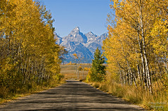 Road to Heaven (Happy Photographer) Tags: road trees mountains yellow fallcolor getty gettyimages grandtetonnationalpark wow1 wow2 happyphotographer mygearandme mygearandmepremium topphotospots tpslandscape amyhudechek
