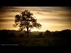 Plawsworth, County Durham at Dawn (Alex Nichol) Tags: sunrise landscape dawn countydurham carlzeissplanart50mmf14 canoneos5dmarkii plawsworth lee09ndhardgrad lee09ndsoftgrad