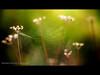 Weaver's Dance (Alex Nichol) Tags: sunrise landscape dawn countydurham carlzeissplanart50mmf14 canoneos5dmarkii plawsworth lee09ndhardgrad lee09ndsoftgrad