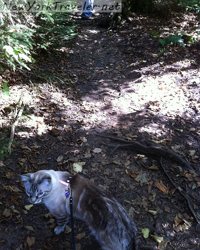 Livvy Climbing 1