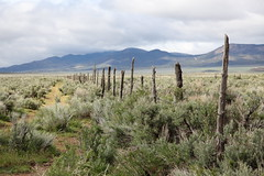 Rustic fence in western United Sates (annemconnor@yahoo.com) Tags: ranch old mountains nature field outside utah sticks wire natural farm rustic nobody pasture photograph western barbedwire fencing copyspace southernutah sagebrush bramble wildwildwest fallingapart rickety beautyinnature fency westernunitedstates centralutah