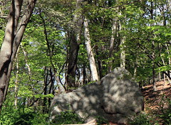 IMG_4540 (sandy richard) Tags: usa newyork unitedstates geology wildwood calverton wildwoodstatepark newyorkstateparks sandyrichard longislandgeology sandrarichard