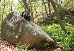 Glacial Erratic, Glenn, and Barberry (sandy richard) Tags: usa newyork unitedstates geology wildwood calverton wildwoodstatepark newyorkstateparks sandyrichard longislandgeology sandrarichard