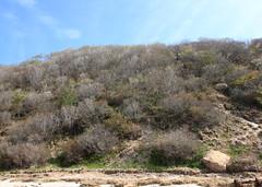 Coastal Bluff (sandy richard) Tags: usa newyork unitedstates geology wildwood calverton wildwoodstatepark newyorkstateparks sandyrichard longislandgeology sandrarichard