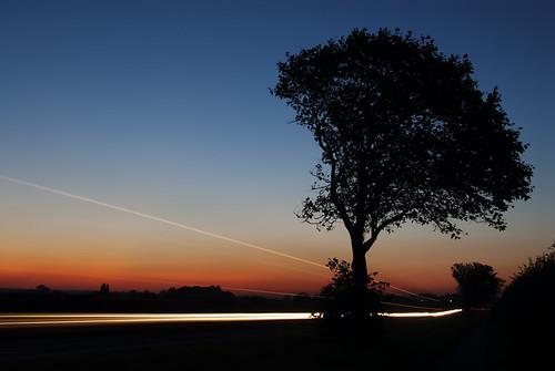 フリー写真素材, 自然・風景, 樹木, 夕日・夕焼け・日没, イギリス,