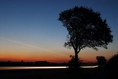 [フリー画像] 自然・風景, 樹木, 夕日・夕焼け・日没, イギリス, 201110010500