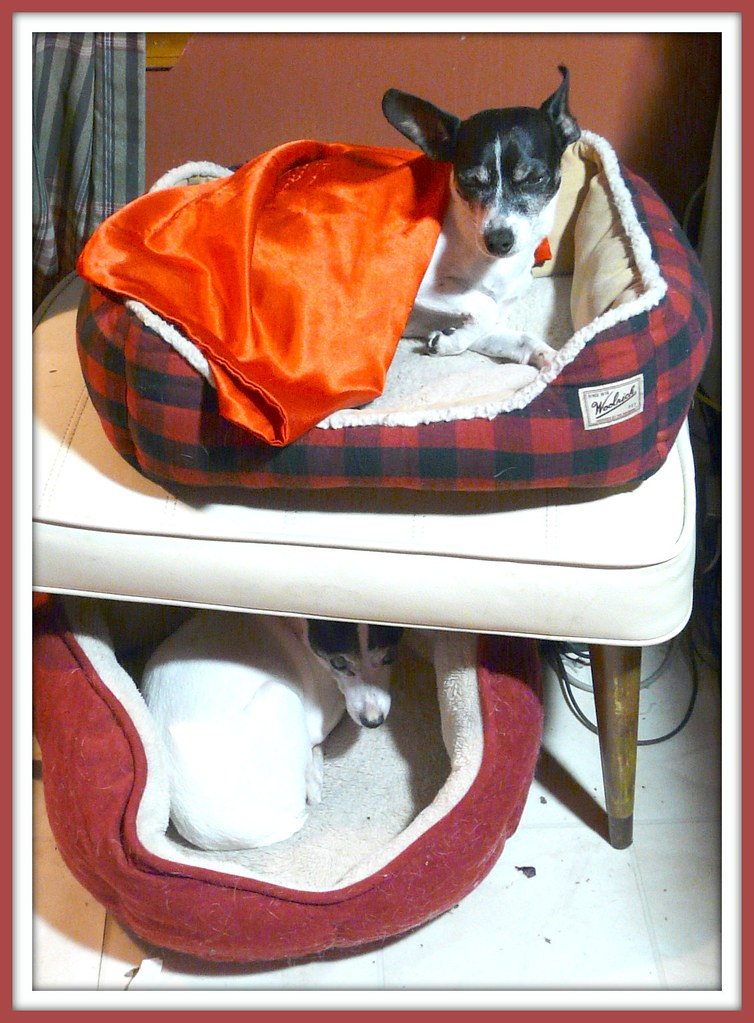 Doggie Bunk Beds with Bo and Bob