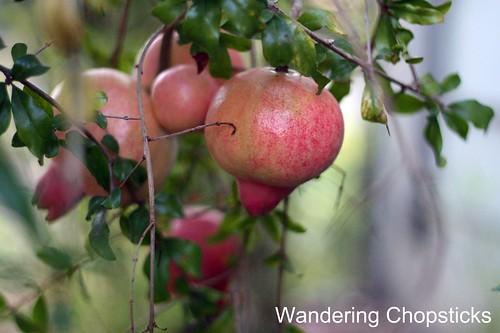 8.28 Pomegranates 2