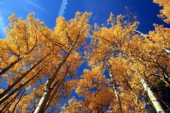 Gunnison (betoeg) Tags: park usa mountain fall colorado trail aspens gunnison betoeg